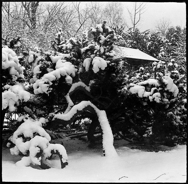 Ogród japoński, wrocław, ogród zimą, zima, śnieżny ogród