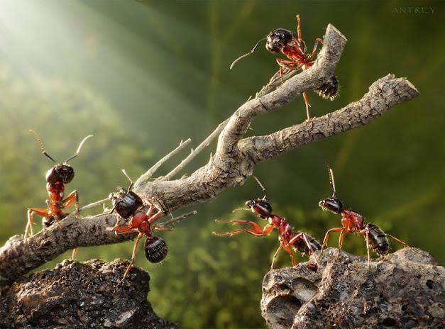 منتديات احلى مصرى | A7la-Masry - صور ومنوعات Funny-and-strange-ants-photographs+%289%29