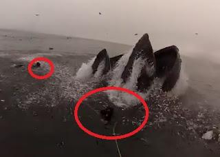 buzos se salvan de ser comidos por ballenas