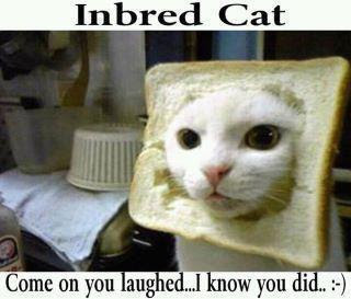 Inbred Cat Funny Facebook Quote