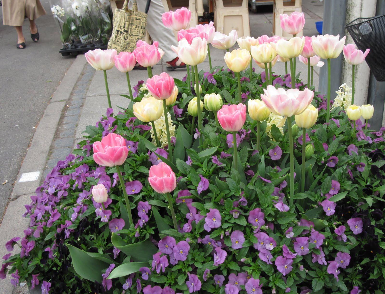 An American Woman In Denmark Beautiful Flowers