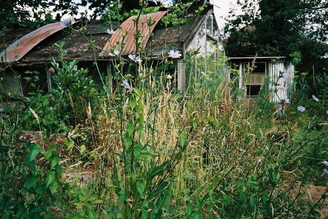 Wild plants in a suburban garden