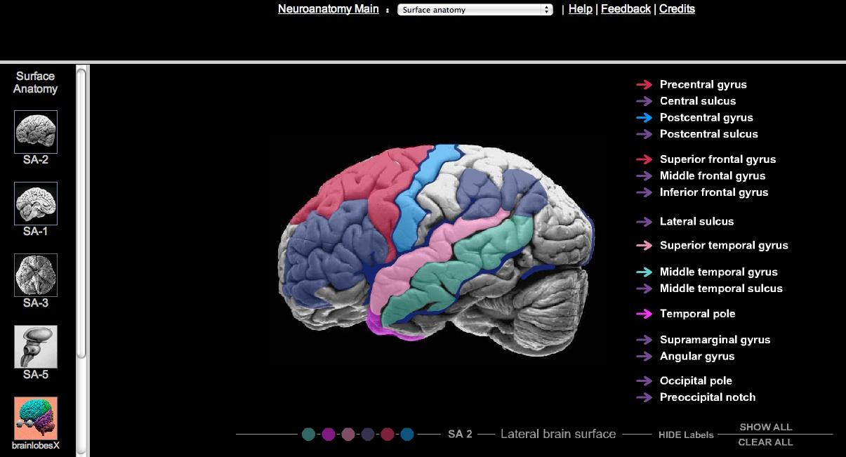 RADIOLOGIA MACARENA: Interactive Neuroanatomy Atlas