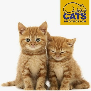 www.cats.org.uk