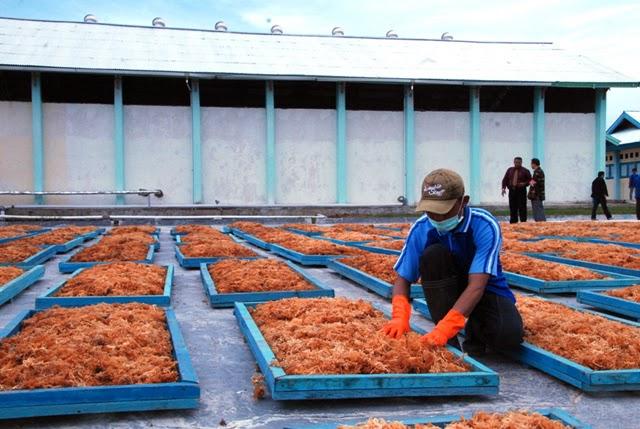 Pemanfaatan Rumput Laut Untuk Industri