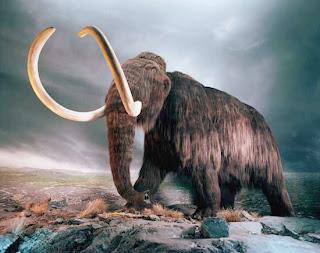 woolly-mammoth.jpeg