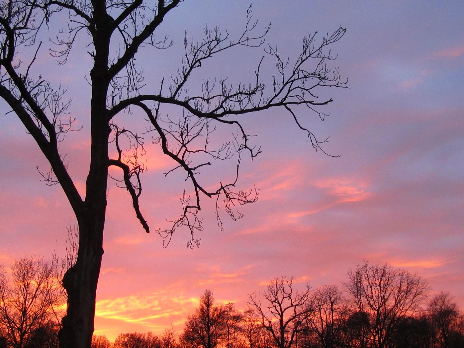 sunset in the Vondelpark, Amsterdam