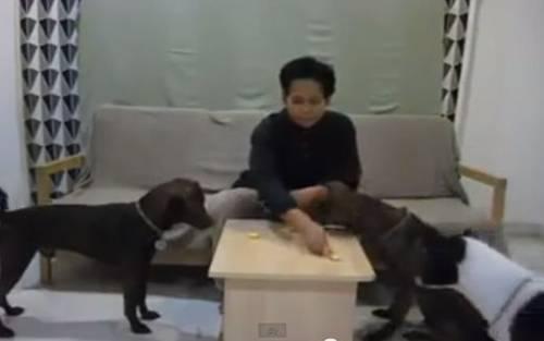 hukum memegang membela anjing dan khinzir