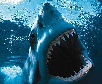 Estalló un estanque de tiburones en un shopping