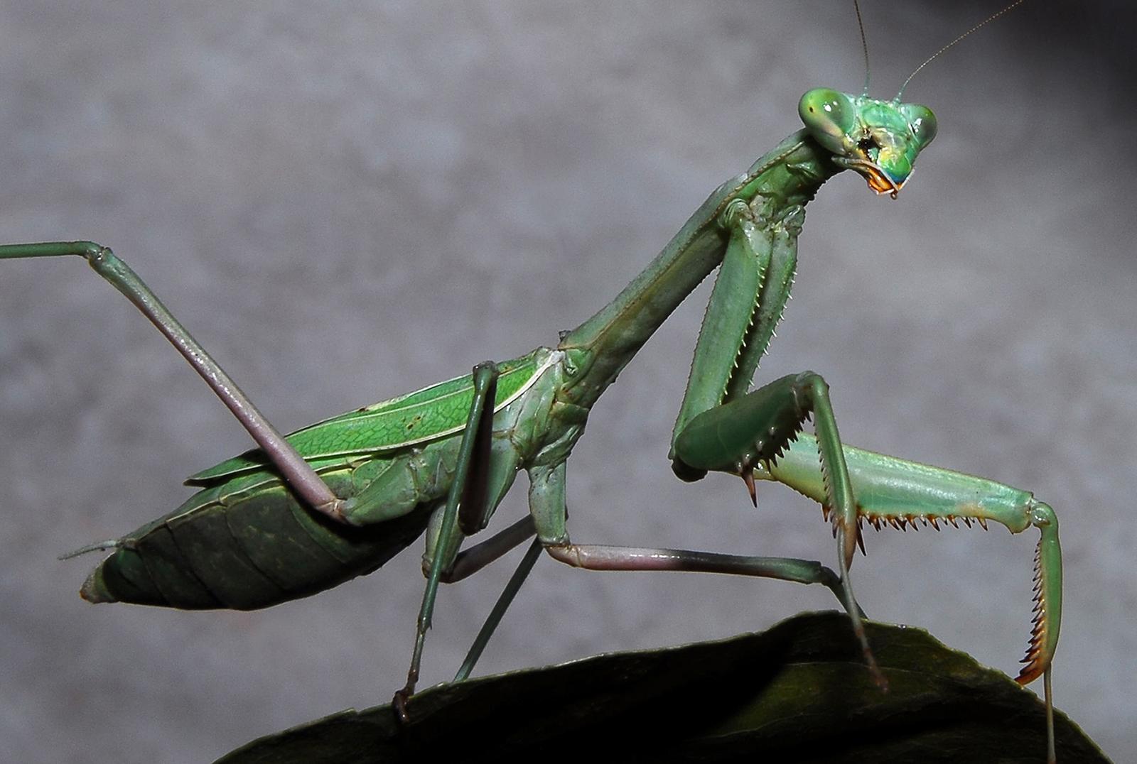 my two cents  bugs i don u0026 39 t kill