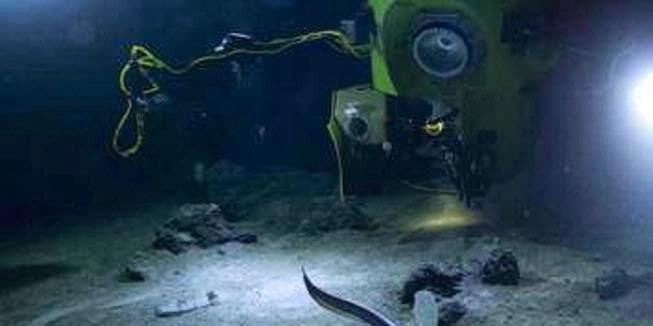 Kehidupan ekstrem ditemukan di palung laut terdalam