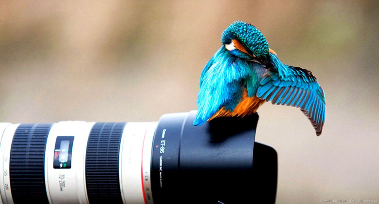 beautiful bird canon lens wallpaper hd desktop | best image background