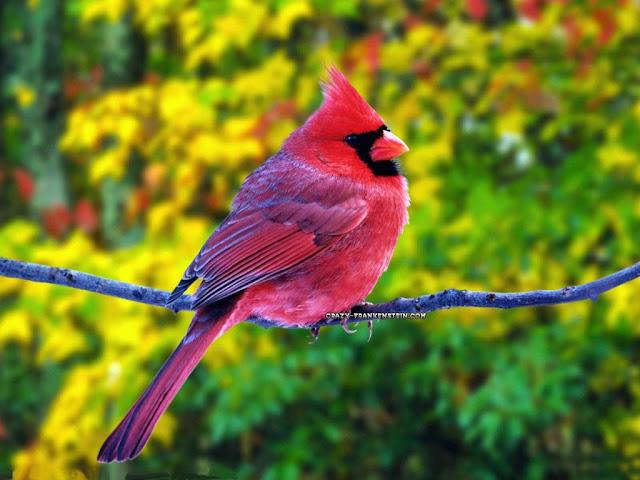 Cute Birds HD Wallpapers