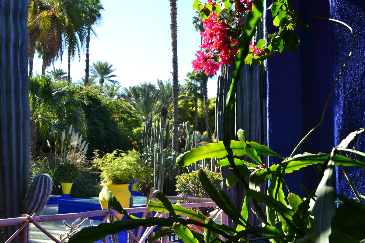 Tweet yves saint laurent jardin majorelle marrakech for Jardin yves saint laurent