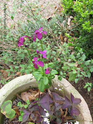 annieinaustin fragrant stock with oxalis