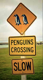 Slow Traffic – Penguin Crossing