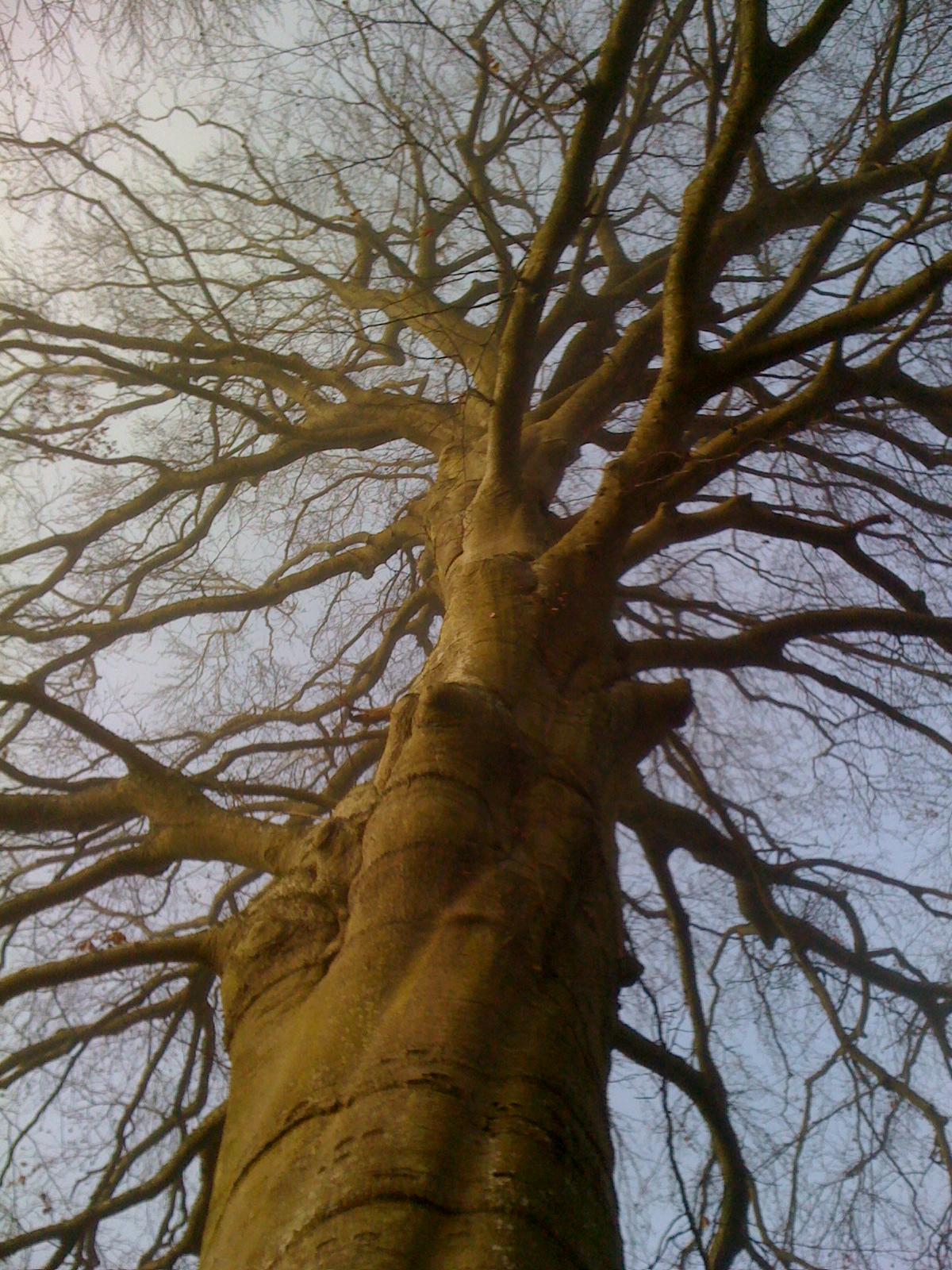 Des racines et des r ves - Arbre sans racine envahissante ...