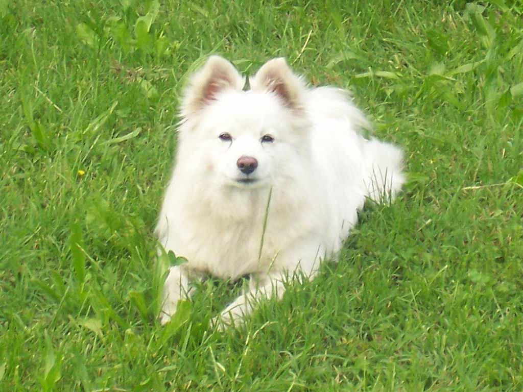 download wallpaper dog little - photo #42