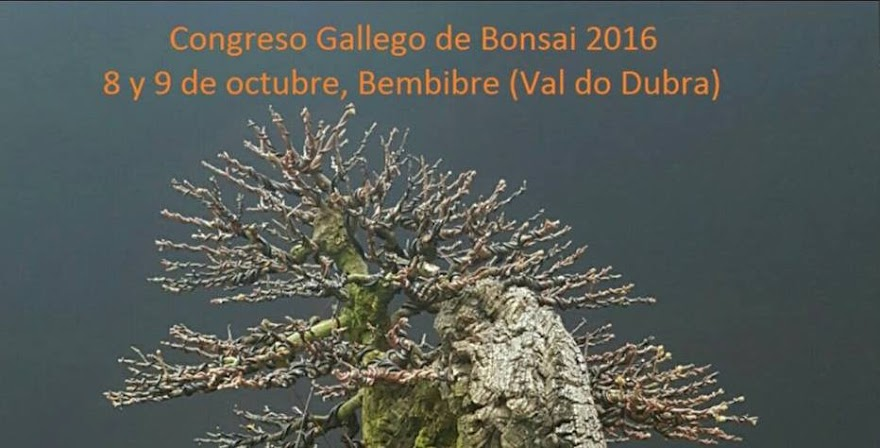 CONGRESO GALLEGO DE BONSAI