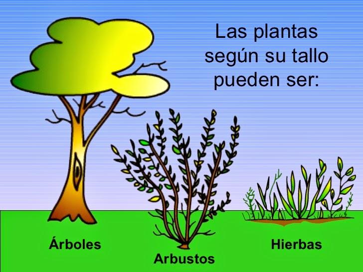 Chiquiliyela el reino de las plantas for Medio en el que habitan los arboles