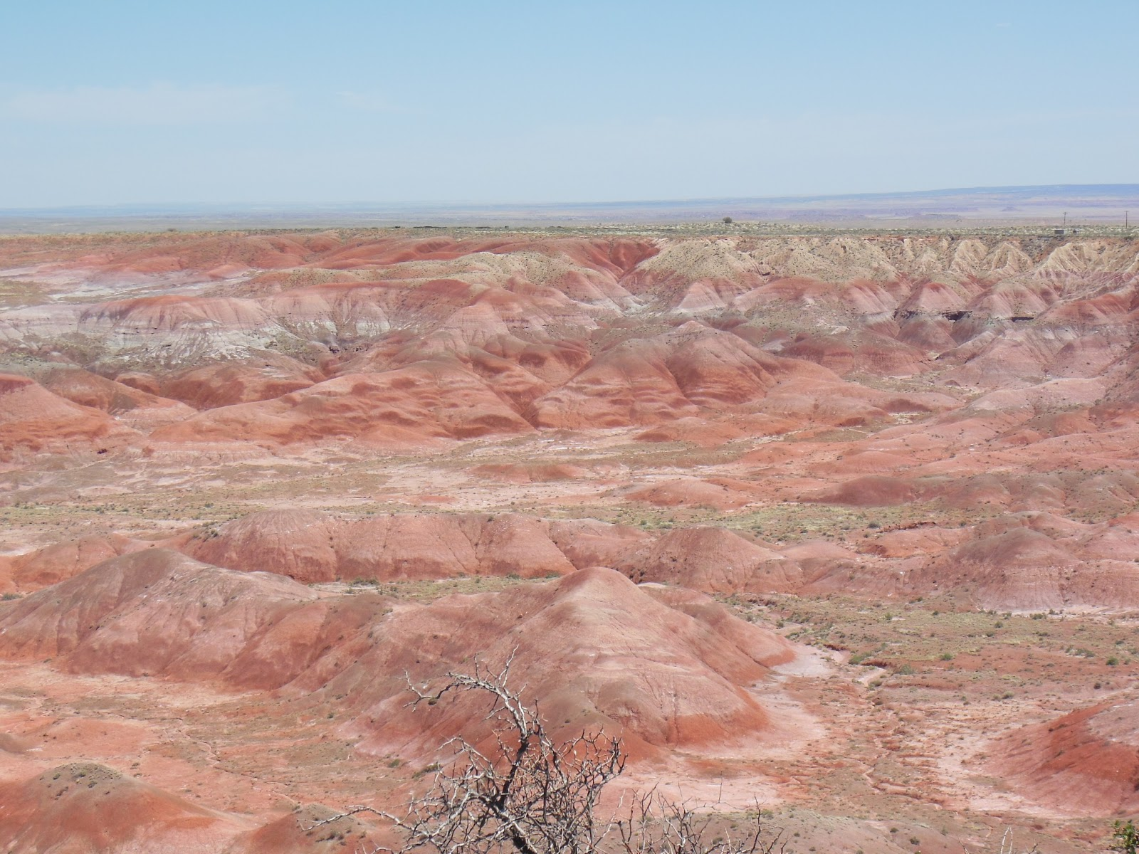 petrified forest natl pk single men over 50 Exploring what to see and do in petrified forest and painted desert  several areas were set aside as the petrified forest national  a national park.
