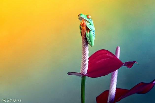 Wil Mijer, cute tinny creatures