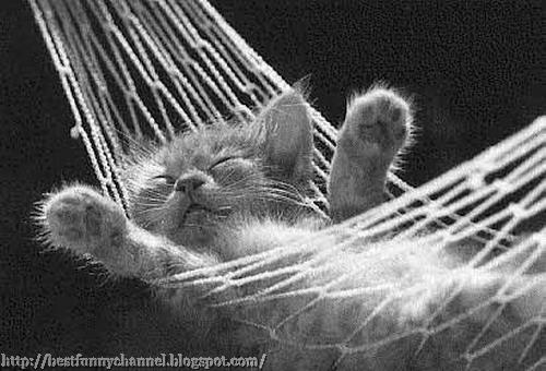 Very funny kitten.
