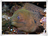 Electric Eel Animal Pictures