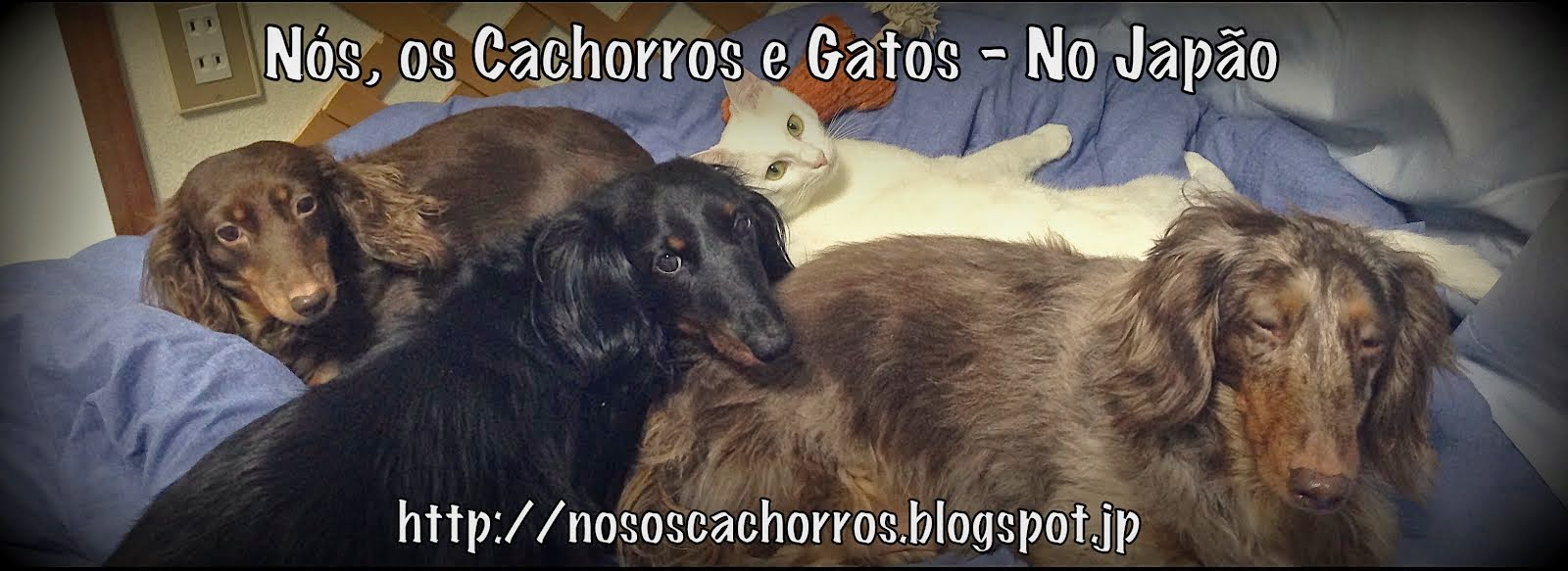 Nós, os Cachorros - No Japão
