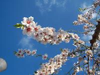 http://3.bp.blogspot.com/-4WGc1APqtdA/T3SKFm3xbCI/AAAAAAAAP30/hvSHS0M9BSg/s1600/Botanic+Serrat+Primavera.JPG