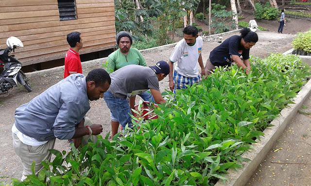 Ini Cara Jurnalis Selamatkan Hutan Papua