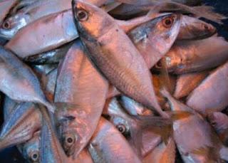 Cuaca Tidak Menentu Sebabkan Bekalan Ikan Kurang Di Kedah