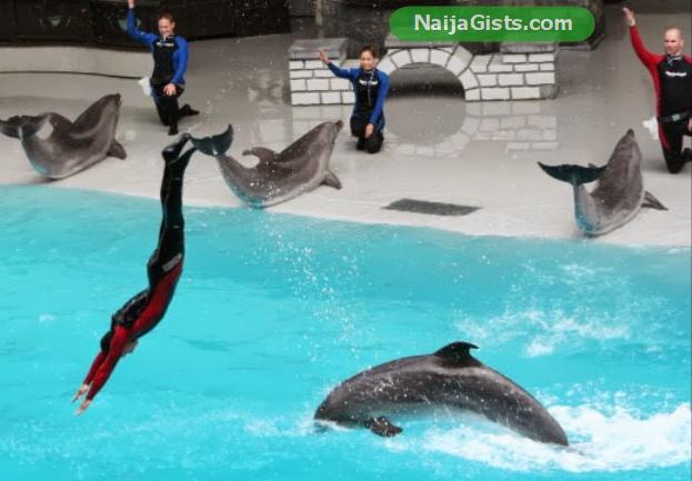 dolphins show at marineland niagara falls canada