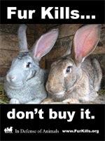 Stop the Cruelty!