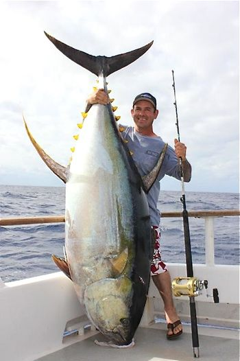 Big fishes of the world yellowfin tuna page 2 for Does tuna fish have scales