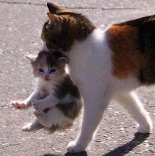 Kisah Mueeza Kucing Kesayangan Nabi Muhammad dan Keistimewaan Kucing