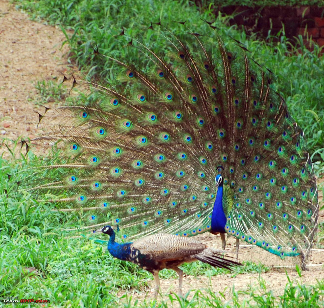 True Colors Of India Wildlife Conservation In India