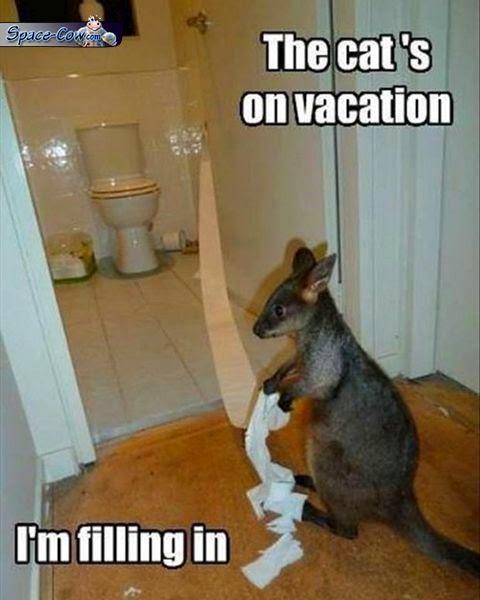 funny cute kangaroo picture