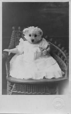 dog head on vintage baby photograph