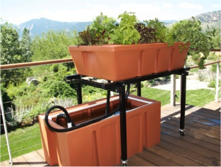 Fisch sust 5304 blogger for Balcony aquaponics