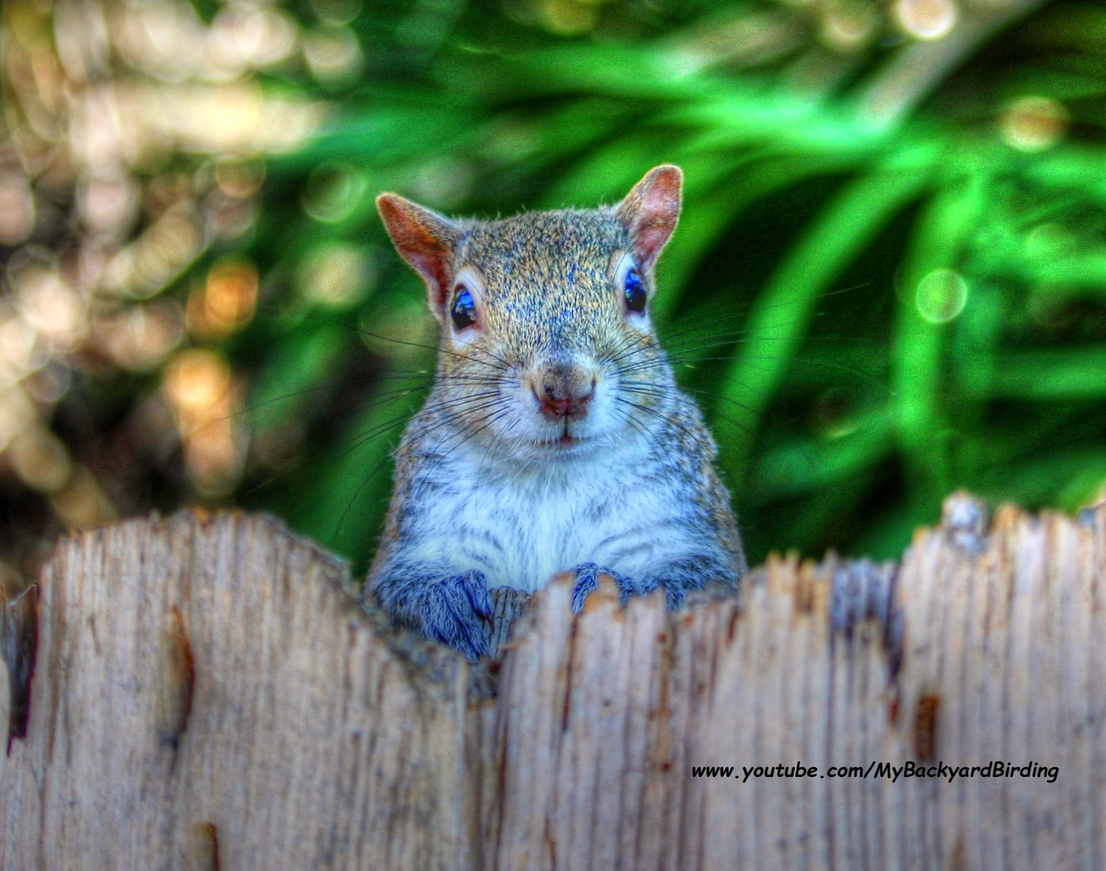 Cute Gray Squirrel