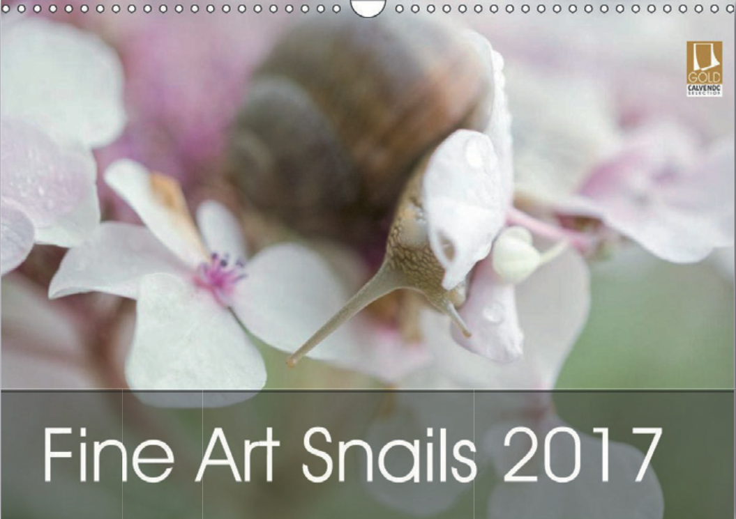 My Fine Art Snail 2017 Calendar !!