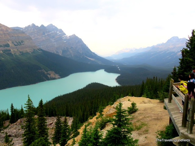 Peyto Lake, The Icefields Parkway
