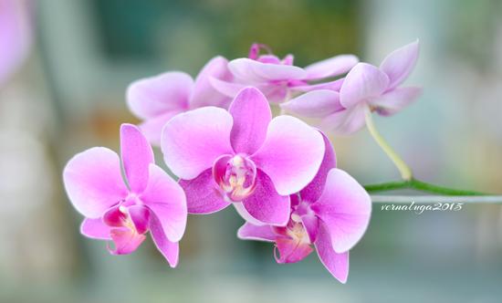 Verna Luga Floral Photography 2015