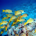 Osmorality: Freshwater vs. Saltwater Fish