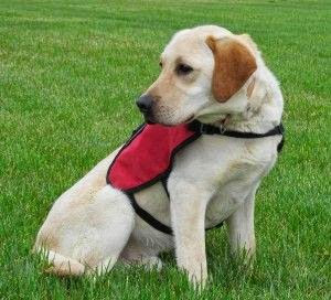 Requirements For Certified Service Dog