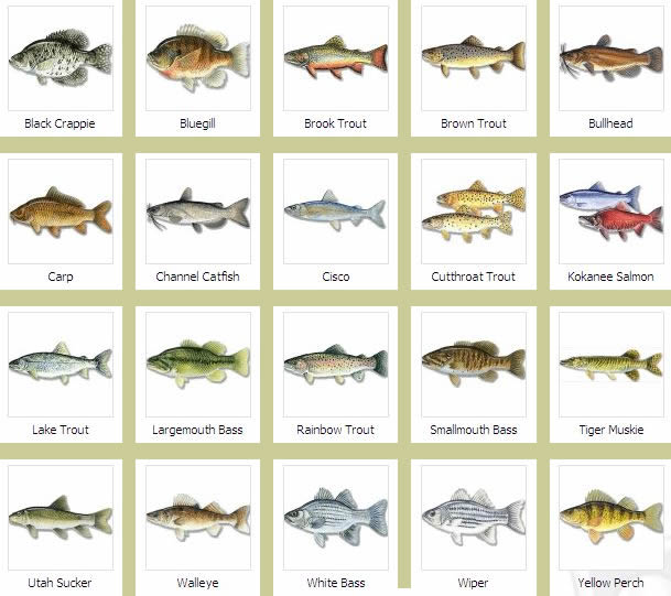 Brandedhub fish species for Name of fish