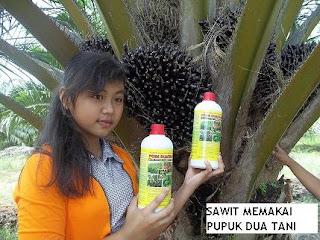 Panen Raya Sawit dengan Pupuk Organik Poin Duatani