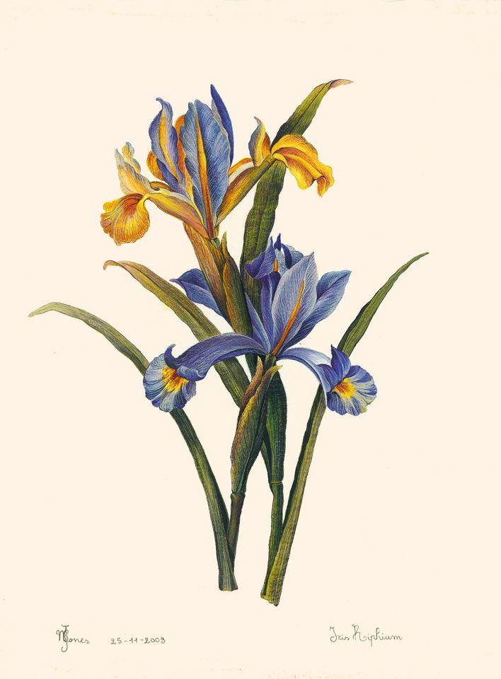I fiori di maria pia luly for Disegni di fiori a matita