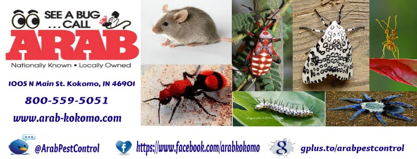 Arab Pest Control